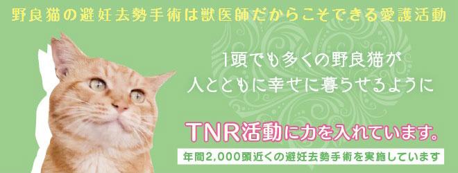 TNR活動に力をいれています